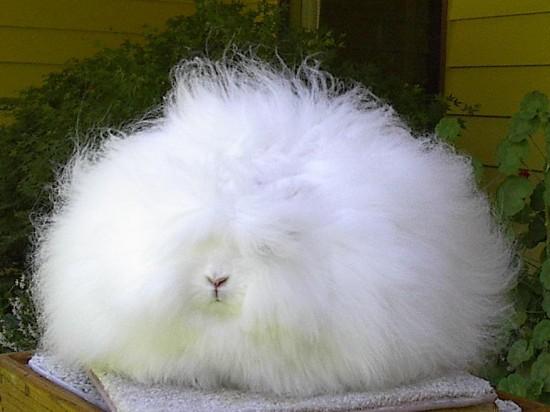 モフモフ,ウサギ,画像,まとめ011