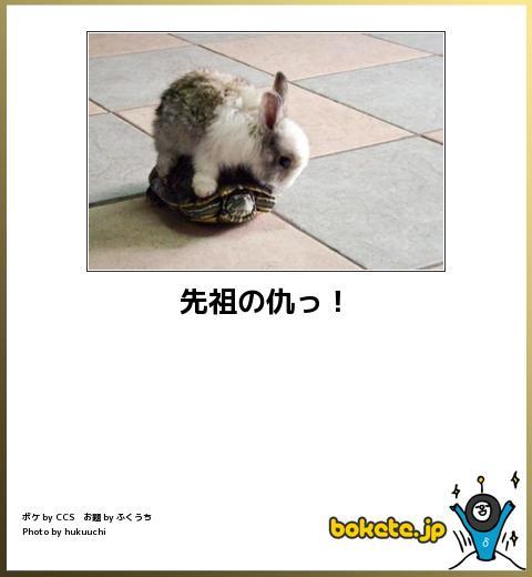 笑える,ウサギ,bokete,ボケて,画像,まとめ011