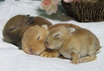 癒し,ウサギ,寝顔,画像,まとめ012