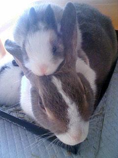 ウサギ,おしくらまんじゅう,集合,画像,まとめ012