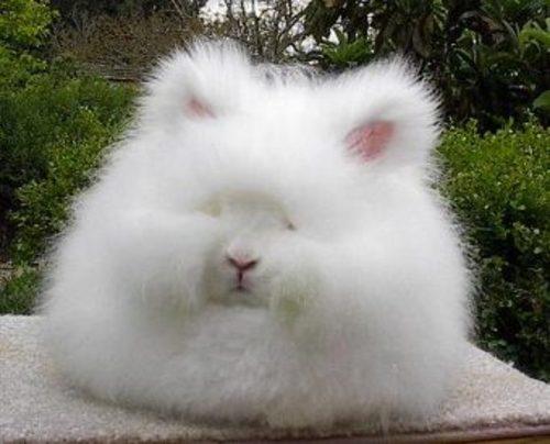 モフモフ,ウサギ,画像,まとめ012
