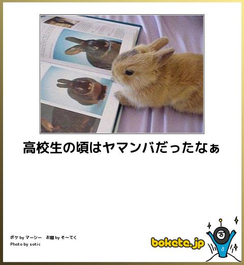 笑える,ウサギ,bokete,ボケて,画像,まとめ012