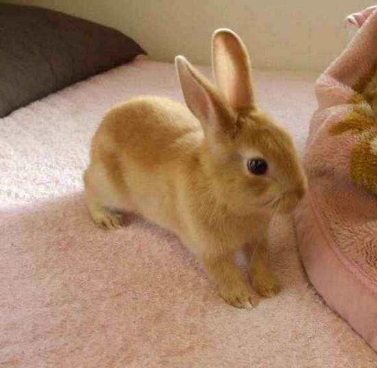 うさぎ,ウサギ,画像,まとめ014