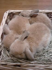 ウサギ,おしくらまんじゅう,集合,画像,まとめ014