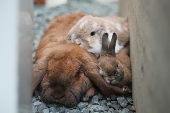 ウサギ,おしくらまんじゅう,集合,画像,まとめ015