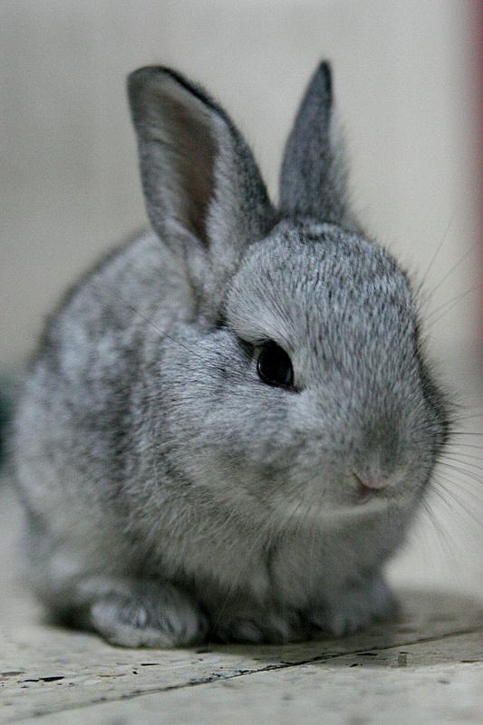 うさぎ,ウサギ,画像,まとめ019