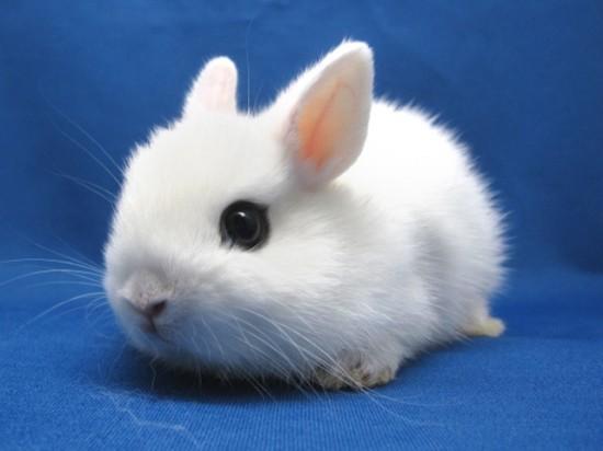 かわいらしい,子ウサギ,画像,まとめ020