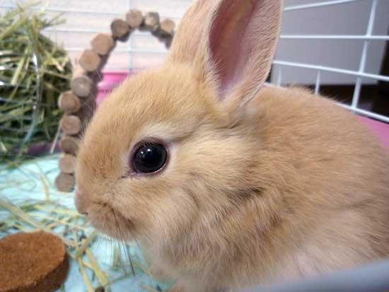 うさぎ,ウサギ,画像,まとめ021