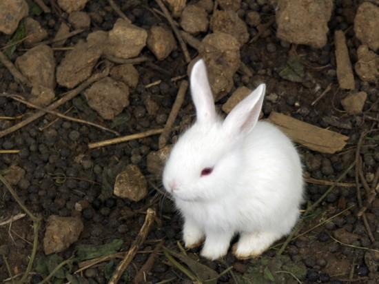 うさぎ,ウサギ,画像,まとめ022