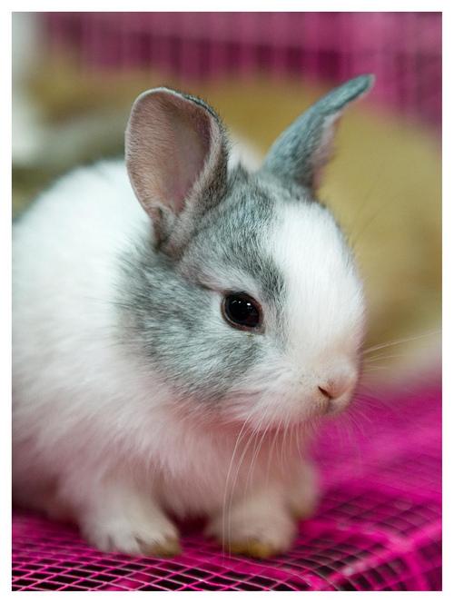 かわいらしい,子ウサギ,画像,まとめ027