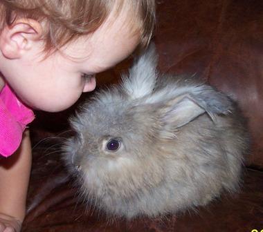 もふもふ,アンゴラウサギ,画像,まとめ028