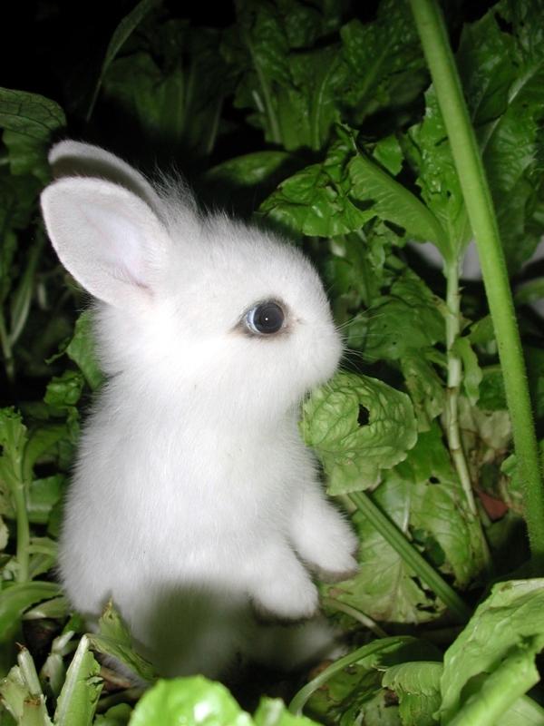 かわいらしい,子ウサギ,画像,まとめ035