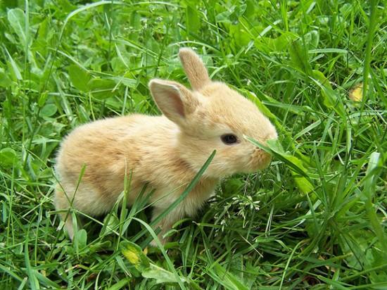 かわいらしい,子ウサギ,画像,まとめ036