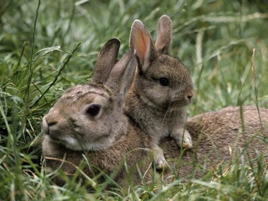 かわいらしい,子ウサギ,画像,まとめ043