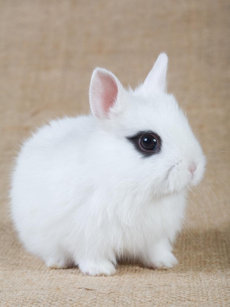 かわいらしい,子ウサギ,画像,まとめ054