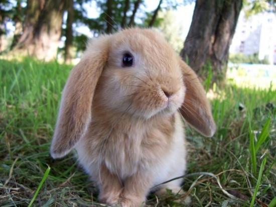 かわいらしい,子ウサギ,画像,まとめ059