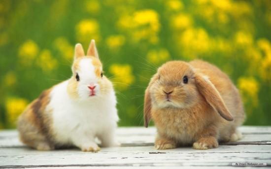 かわいらしい,子ウサギ,画像,まとめ067