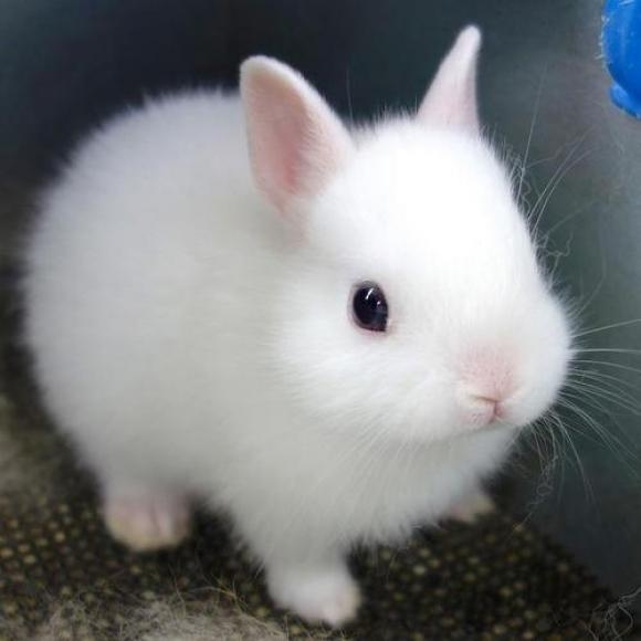 かわいらしい,子ウサギ,画像,まとめ071