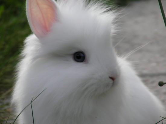 かわいらしい,子ウサギ,画像,まとめ072