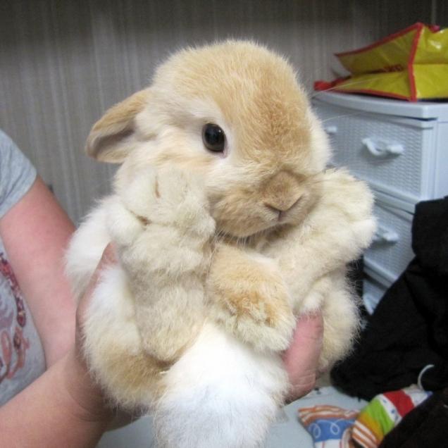 かわいらしい,子ウサギ,画像,まとめ074