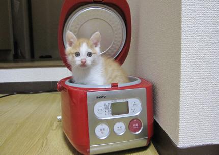 炊飯器,猫,可愛すぎる001