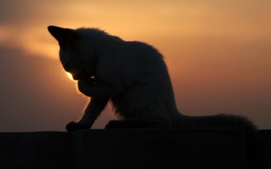 猫,影絵,画像,まとめ001