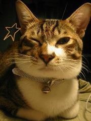 猫,愛らしい,ウインク画像,まとめ001