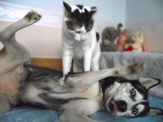犬,猫,ほっこり,画像,まとめ002