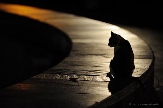 猫,影絵,画像,まとめ003