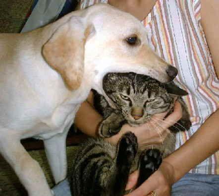 犬,猫,ほっこり,画像,まとめ003