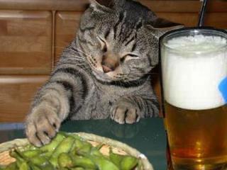 笑わなかったら神,おもしろ,猫,画像,まとめ004