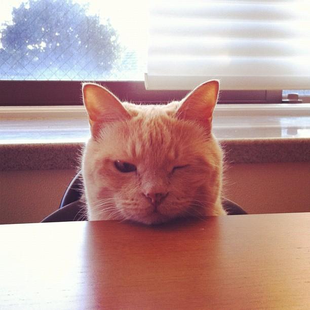 猫,愛らしい,ウインク画像,まとめ004