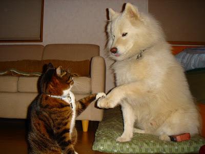 猫,犬,可愛い,仲良し,画像,まとめ004