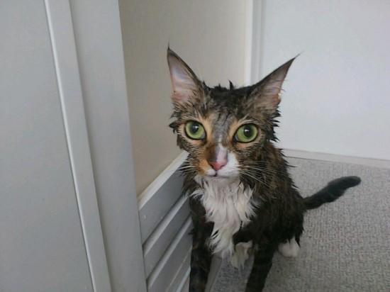 猫,湯船,可愛すぎる,お風呂,画像,まとめ004