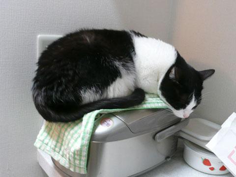 炊飯器,猫,可愛すぎる005