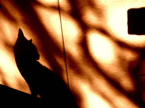 猫,影絵,画像,まとめ005