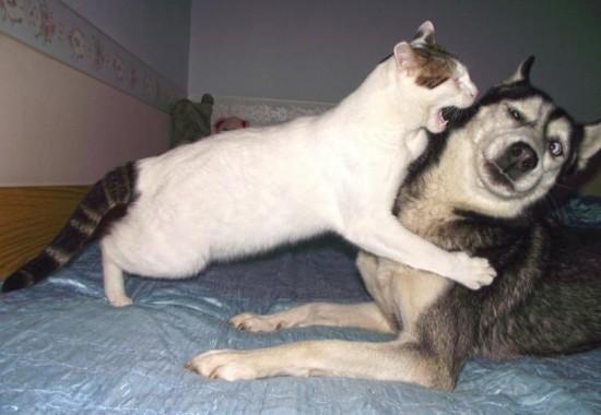 犬,猫,ほっこり,画像,まとめ005