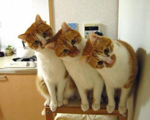 首をかしげている,可愛い,猫.画像,まとめ005