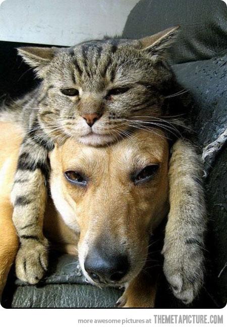 猫,犬,可愛い,仲良し,画像,まとめ005