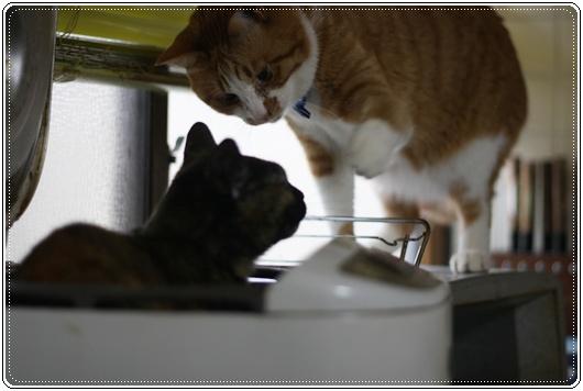 炊飯器,猫,可愛すぎる006