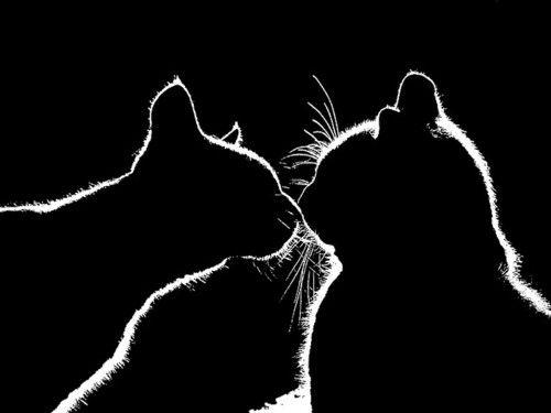 猫,影絵,画像,まとめ006