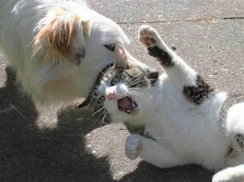 犬,猫,ほっこり,画像,まとめ006