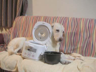炊飯器,猫,可愛すぎる007