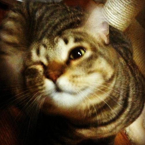 猫,愛らしい,ウインク画像,まとめ007