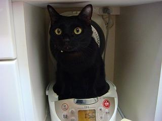 炊飯器,猫,可愛すぎる008