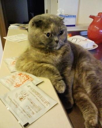 笑わなかったら神,おもしろ,猫,画像,まとめ008