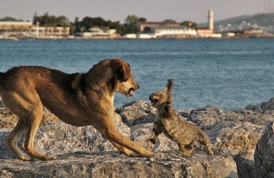 犬,猫,ほっこり,画像,まとめ008