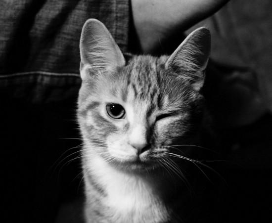 猫,愛らしい,ウインク画像,まとめ010