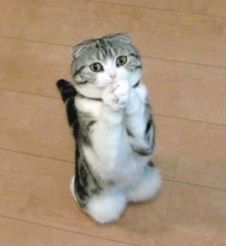 笑わなかったら神,おもしろ,猫,画像,まとめ011