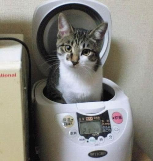 炊飯器,猫,可愛すぎる012